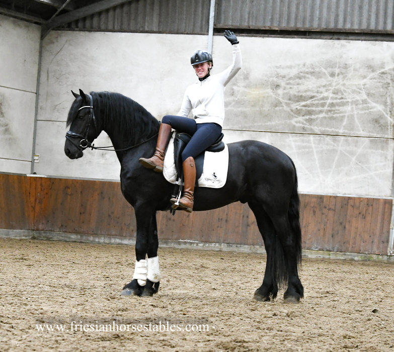 Gerke - Menne 496 Sport x Onne 376 Sport - Beautiful Friesian stallion with good movements and a gorgeous exterior!!