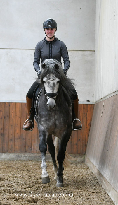 Oslo - Manzanillo LVIII x Ebanisto III - Real eye catching PRE stallion with great movements!!