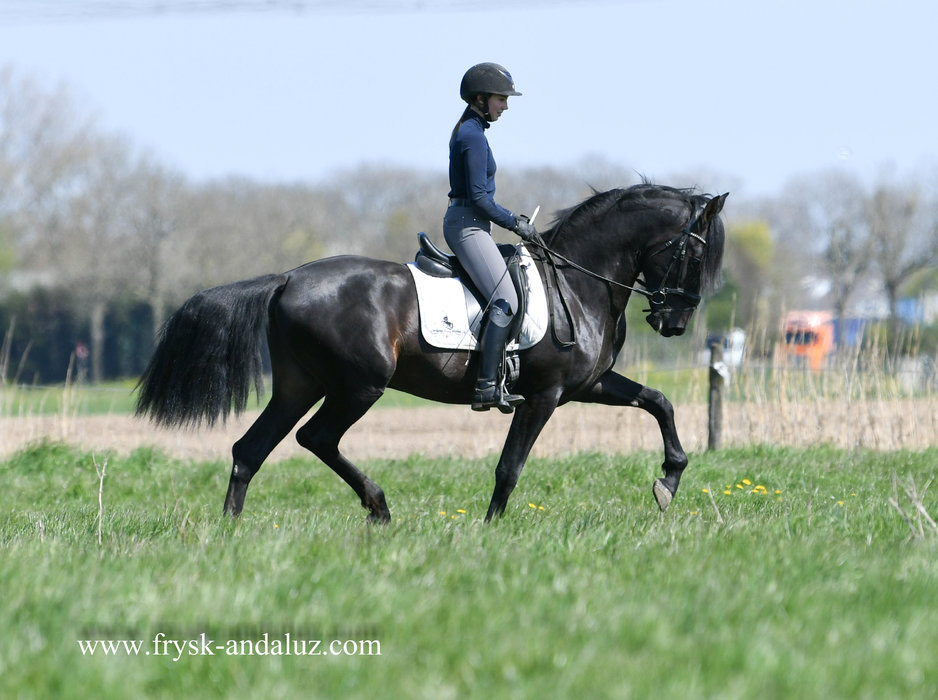 Ilustrado is sold to Cherry in Holland - Congratulations with this handsome boy!!