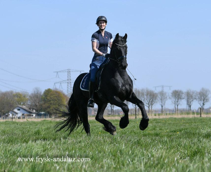 Gerard - Menne 496 Sport x Doaitsen 420 Sport - Toekomstig sport paard - Fijne techniek in de beweging - Ster hengst!!