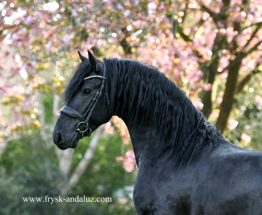 Gerke is sold to a good place Holland - Congratulations with this black beauty!!
