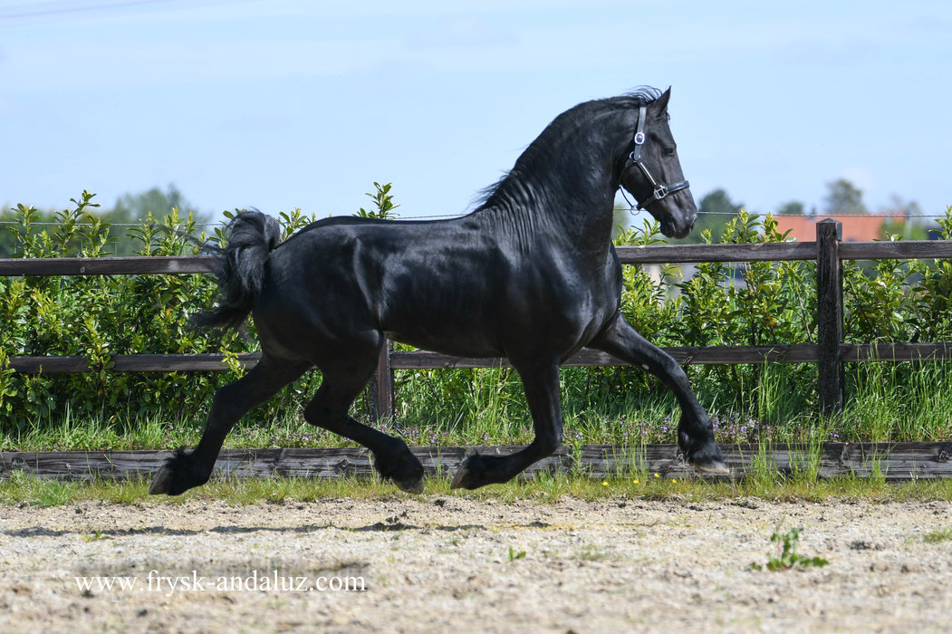 Hearke is sold to mother and daughter in Holland - Congratulations with your 2nd purchase from us!!