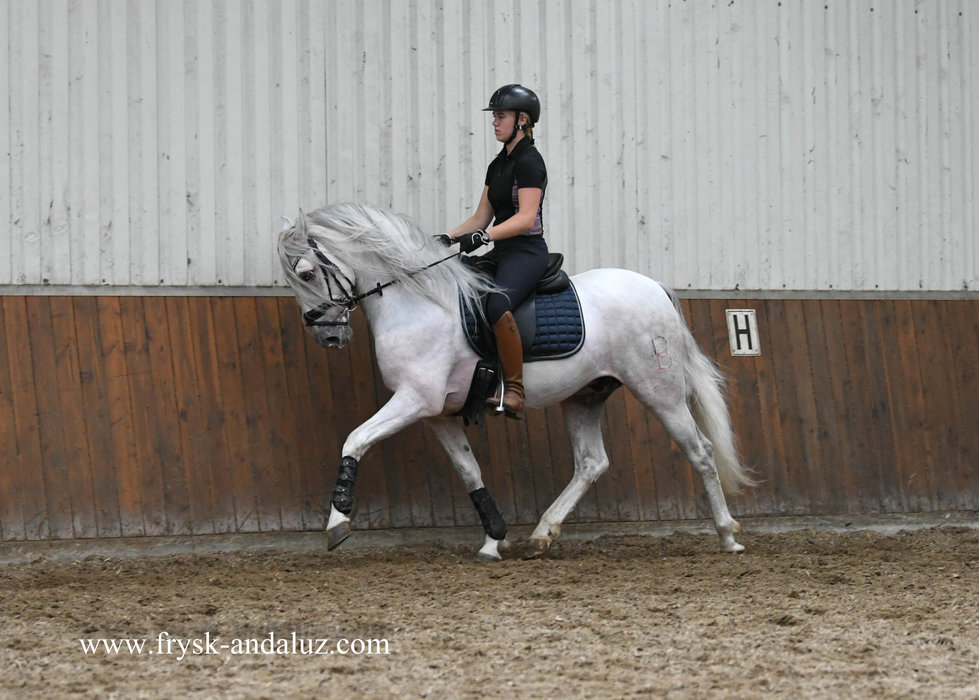 Sendero is sold to Carola in Holland - Congratulations with this special horse!!