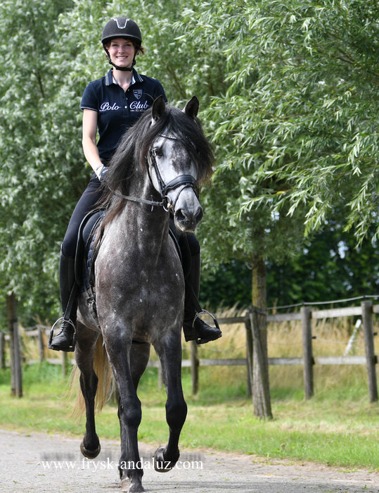 Dandy - Very pretty Andalusian gelding!!