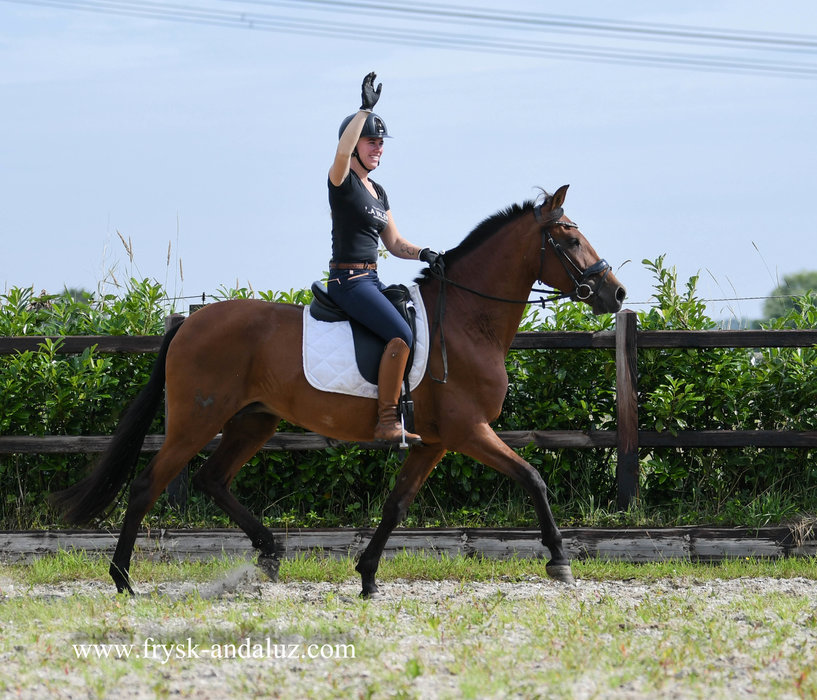 Generica - Femento x Leviton - APTO approved mare out the Military line!! Also very nice to ride!!