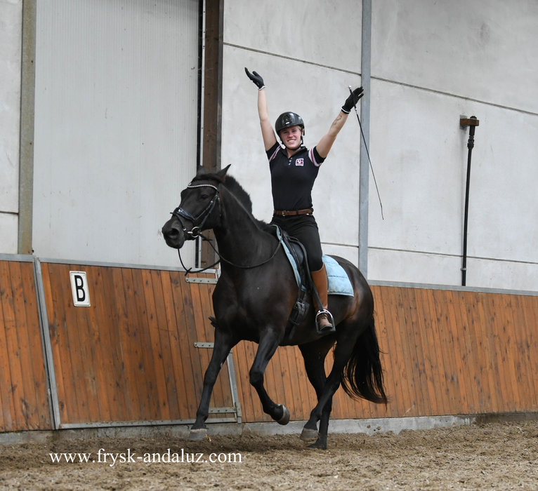 Zambia is sold to Stephanie in Holland - Congratulations with this beautiful mare!!
