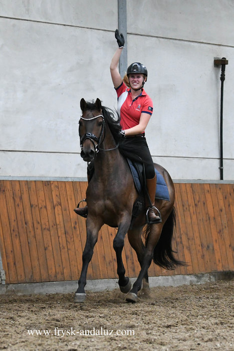 Pregonero - Great moving Cruzado gelding with the looks and the talents for dressage!!