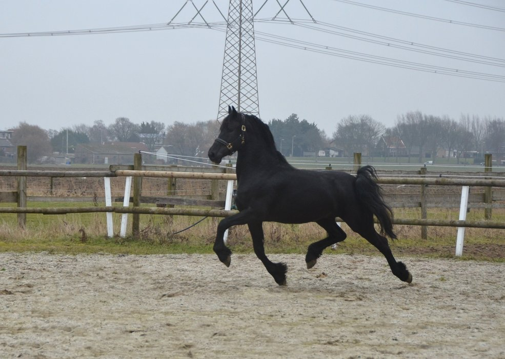 Vriend is sold to Magda in Holland - Congratulations with this own bred, fantastic moving stallion!!