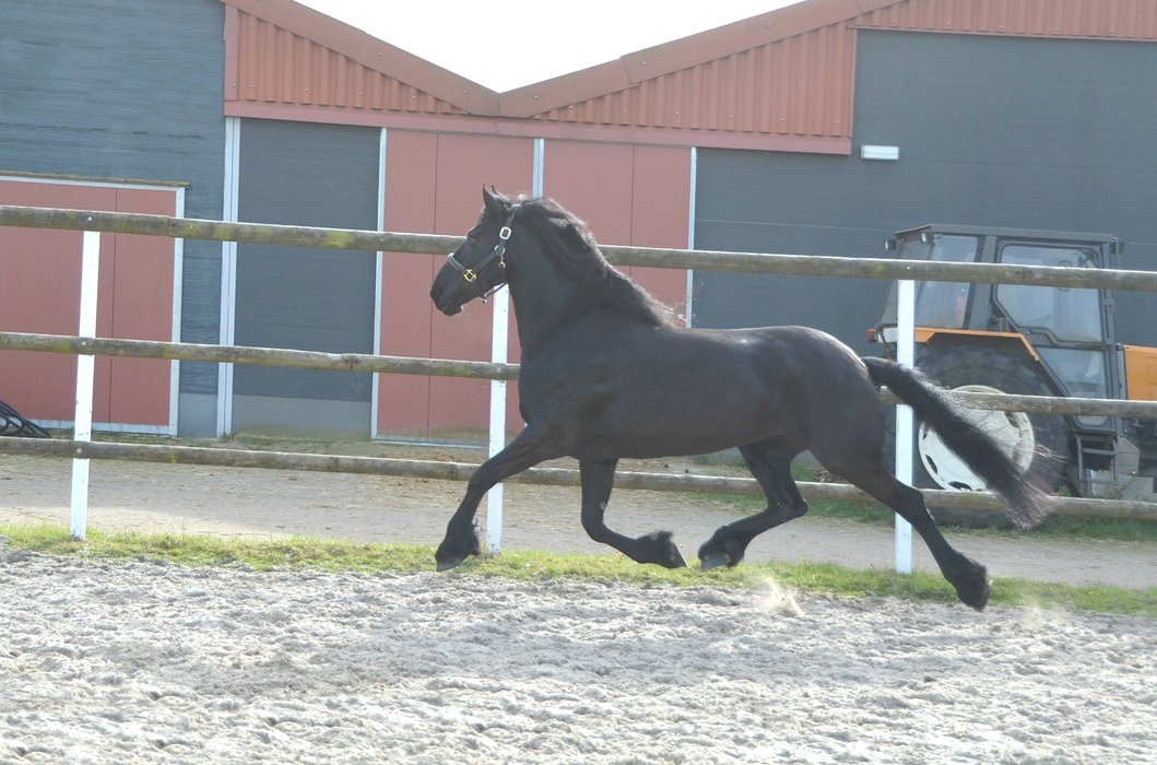 Djoeke is sold to Miss. Nieke in Belgium - Congratulations with this lovely and beautiful mare!!