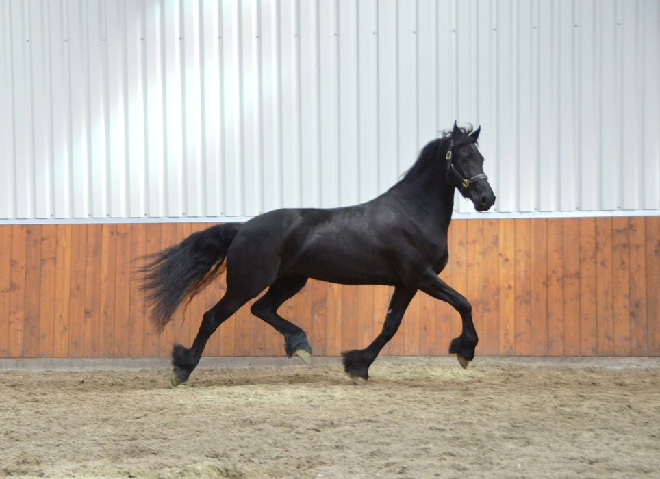 Quinty is sold to a great place somewhere in Holland - Congratulations with this high quality ster mare!!