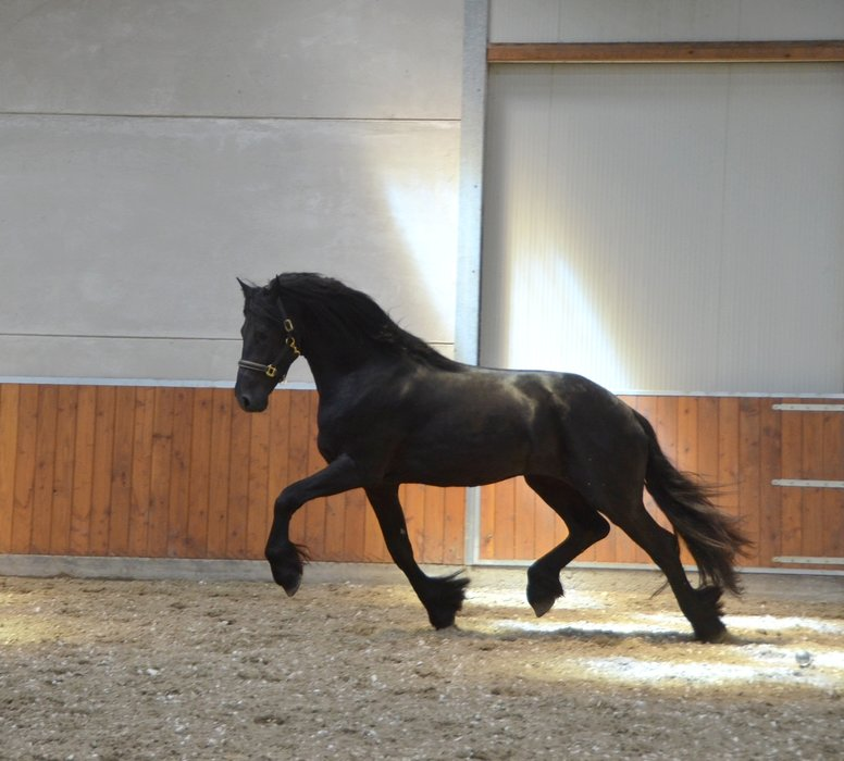 Tjeerd is sold to Russia - Congratulations with this fairytale stallion!