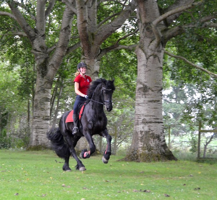 Viktor is sold to Miss. Felicia in Holland - Congratulations with this fantastic Ster stallion!