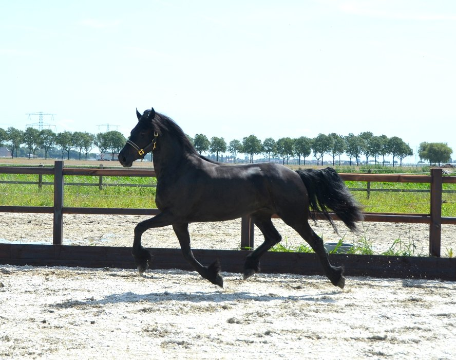 Theober is sold to Eric en Jeanine in Holland - Congratulations with this special mare! We wish you all the best and happiness with Theober!