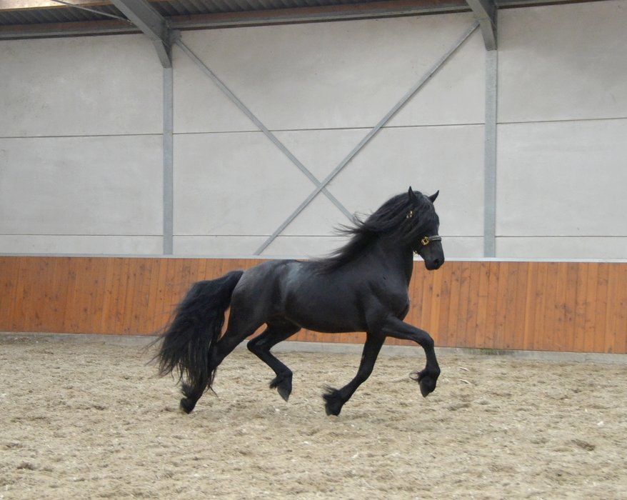 Tulpenkening is sold to a good place somewhere in Holland - Congratulations with this handsome boy!!