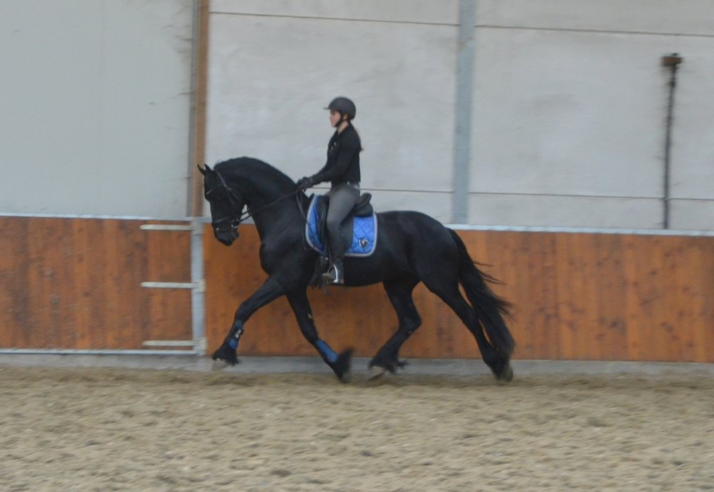 Timo is sold to Hannah in Holland - Dream combination between the two of you!