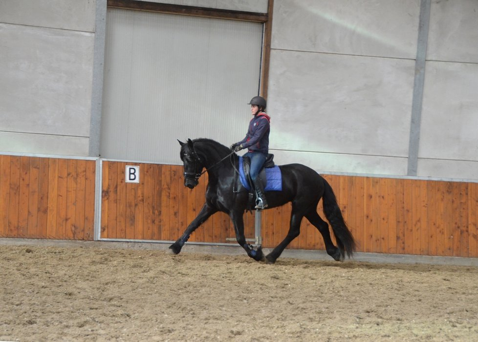 Vrouwke - Andries 415 Sport x Gradus 356 - 3rd Premium stb mare with great movements!