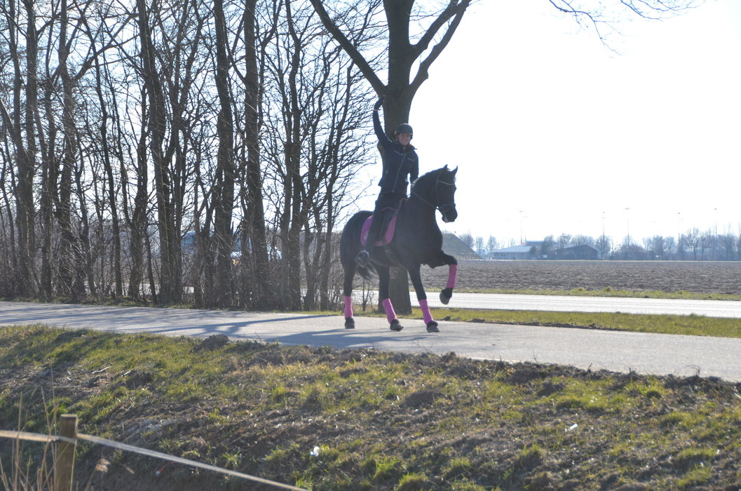 Elkje is sold to a lovely family in Holland - Congratulations with this sweet family horse!!