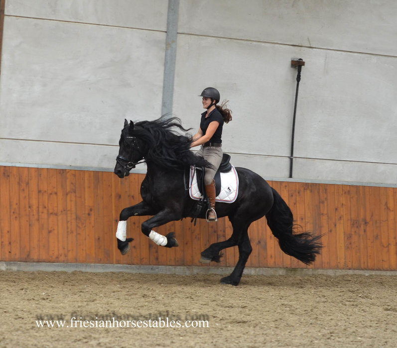 Tilmon is sold to Mary Ann & Jeff in the USA - Congratulations with this Fantastic horse!!