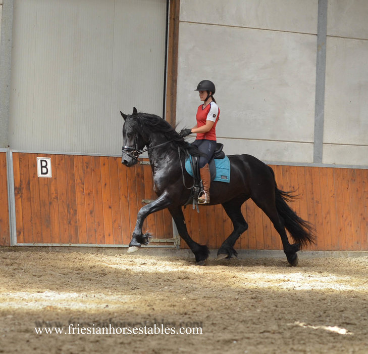 Weart is sold to Mathilda in Sweden - Congratulations with this pretty boy!!