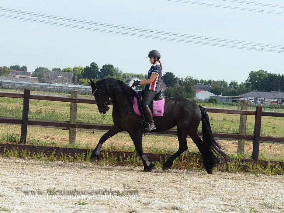 Yasmine is sold to Maud in Holland - Congratulations with this beautiful mare, the two of you look great together!