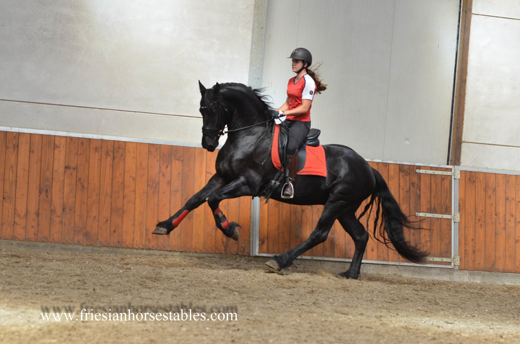Wajo is sold to Thomas and Verena in Germany - Congratulations with this lovely personality horse!!