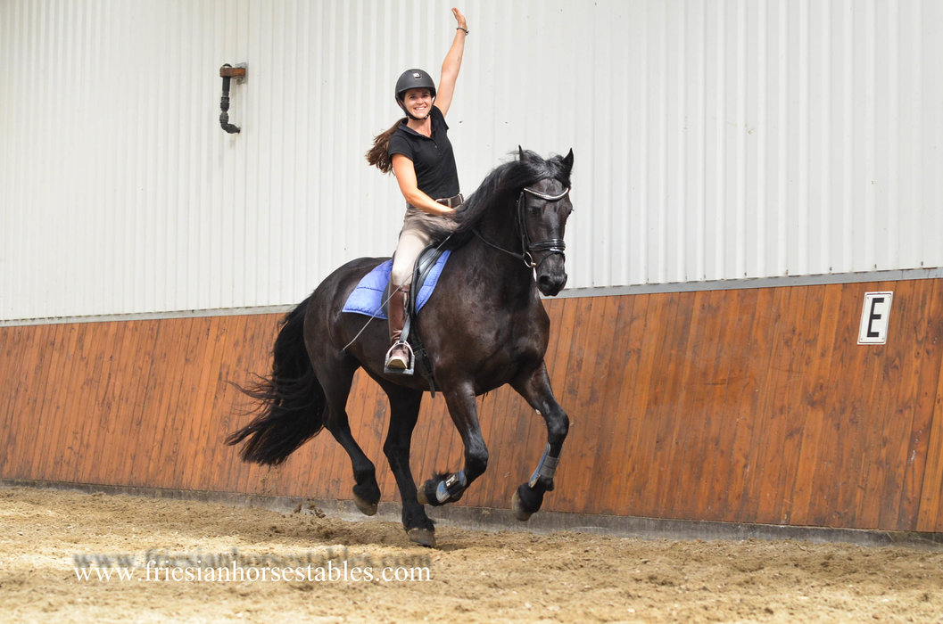 Waeltsje is sold to Conny in Holland - Congratulations with this lovely mare!!