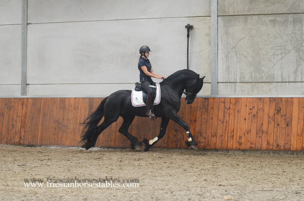 Ulco is sold to Myron in the USA - Congratulations with this amazing Ster stallion!