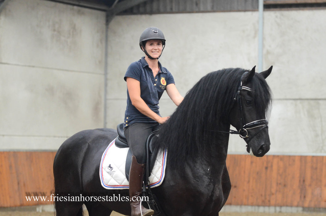 Tsjimme is sold to Bonnie in the USA - Congratulations with this Fantastic Ster stallion!