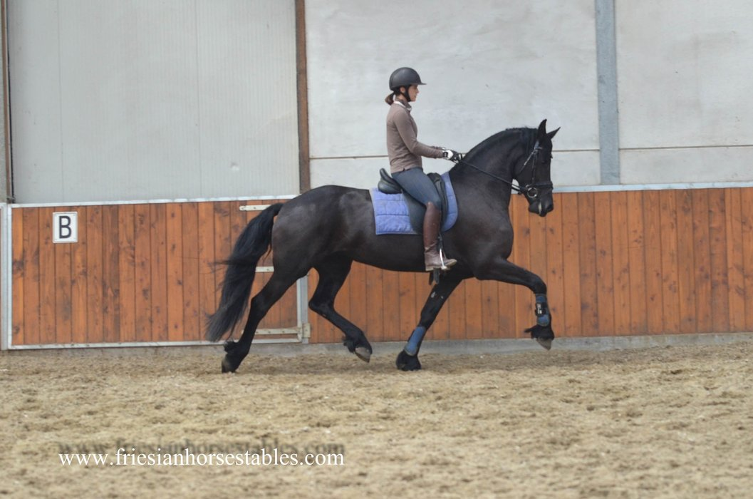 Yaniek is sold to Jan and Jacqueline in Holland - Congratulations with this high quality Ster mare!!