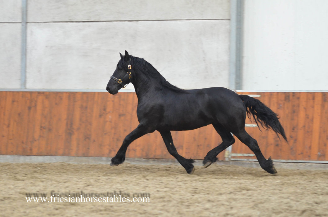 Warner is sold to Manuela in Germany - Congratulations with this lovely gelding!!