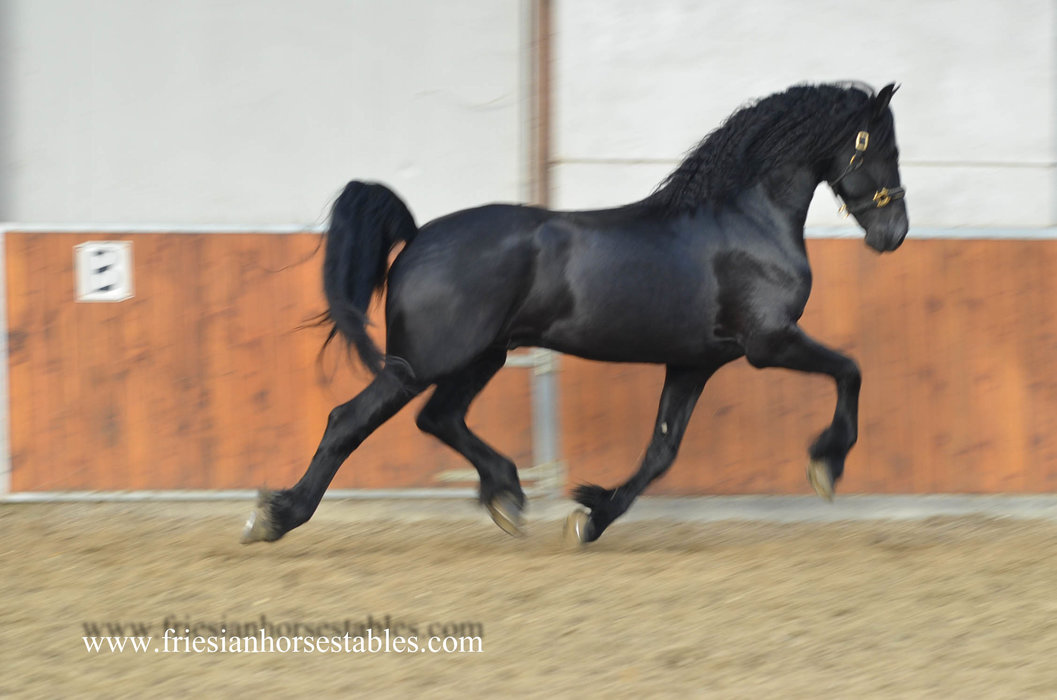 Tjebbe - Maurits 437 Sport x Beart 411 Sport+Pref - Macho Man with the looks, the movements and a great personality!!