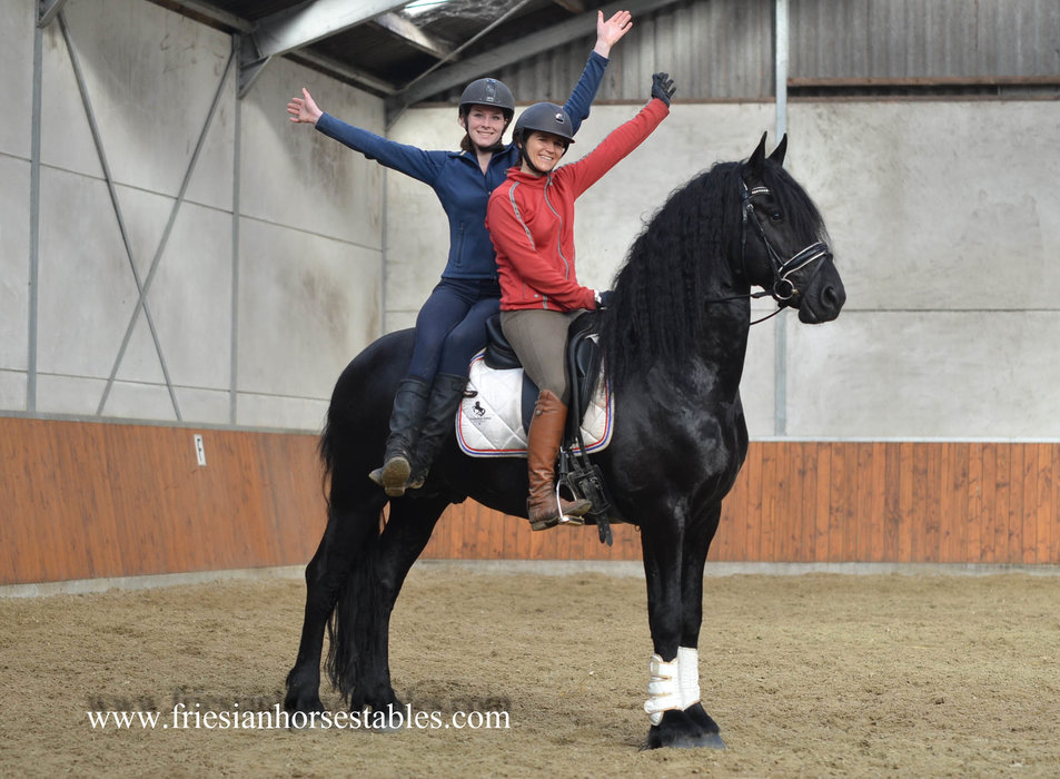 Tjebbe is sold to Sandra in Holland - Congratulations with this handsome and talented gentle man!!