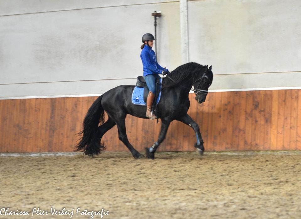 Zep - Rindert 406 Sport x Adel 357 Sport -  Future sports stallion!