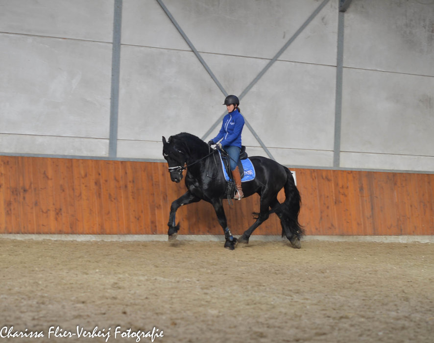 Zep is sold to a very nice family in Poland - Congratulations with this pretty and good moving stallion!!