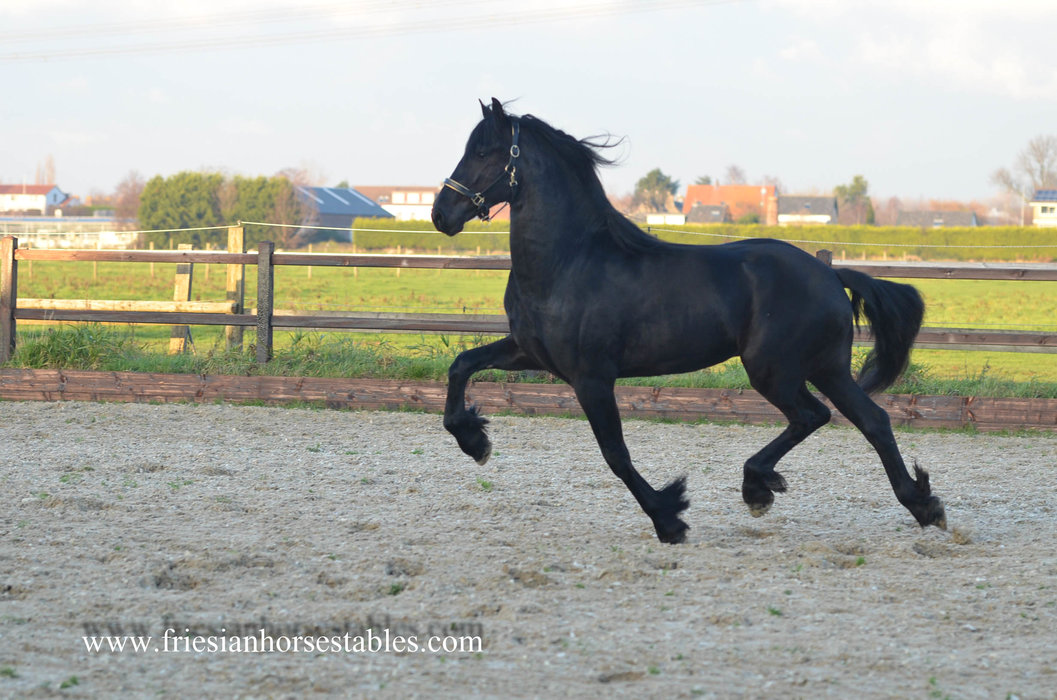 Axel is sold to Lola and Roos in Holland - Congratulations with this handsome boy!!