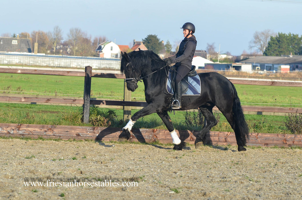 Wybo - Tsjalle 454 Sport x Jasper 366 Sport+Pref - A horse that brings a smile on your face!