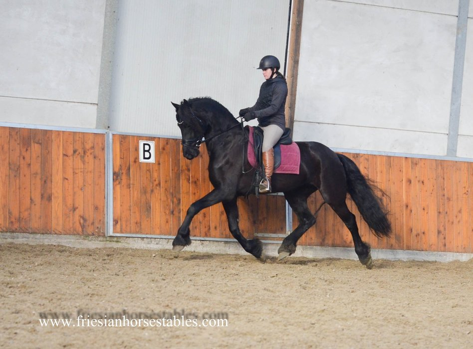 Tess - Bartele 472 Sport x Andries 415 Sport - Luxury, tall and great moving mare with full papers!