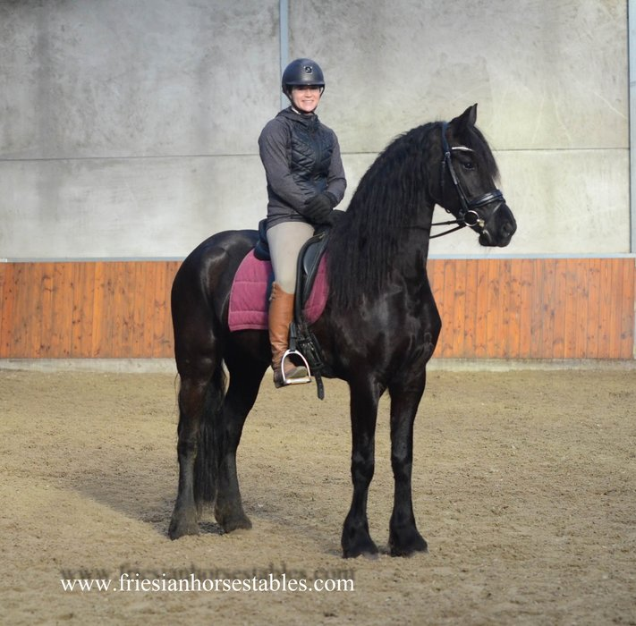 Tess is sold to Désirée in Holland - Congratulations with this dream friesian!