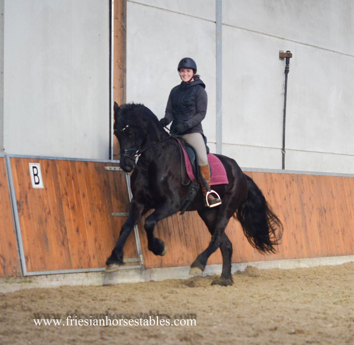 Tess is sold to Désirée in Holland - Congratulations with this dream friesian!!