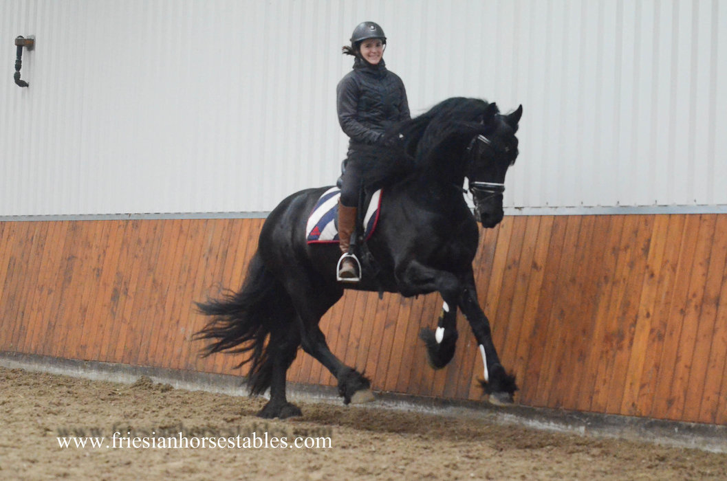 Wybren is sold to Lianne in Holland - Congratulations with this high quality Ster stallion!!