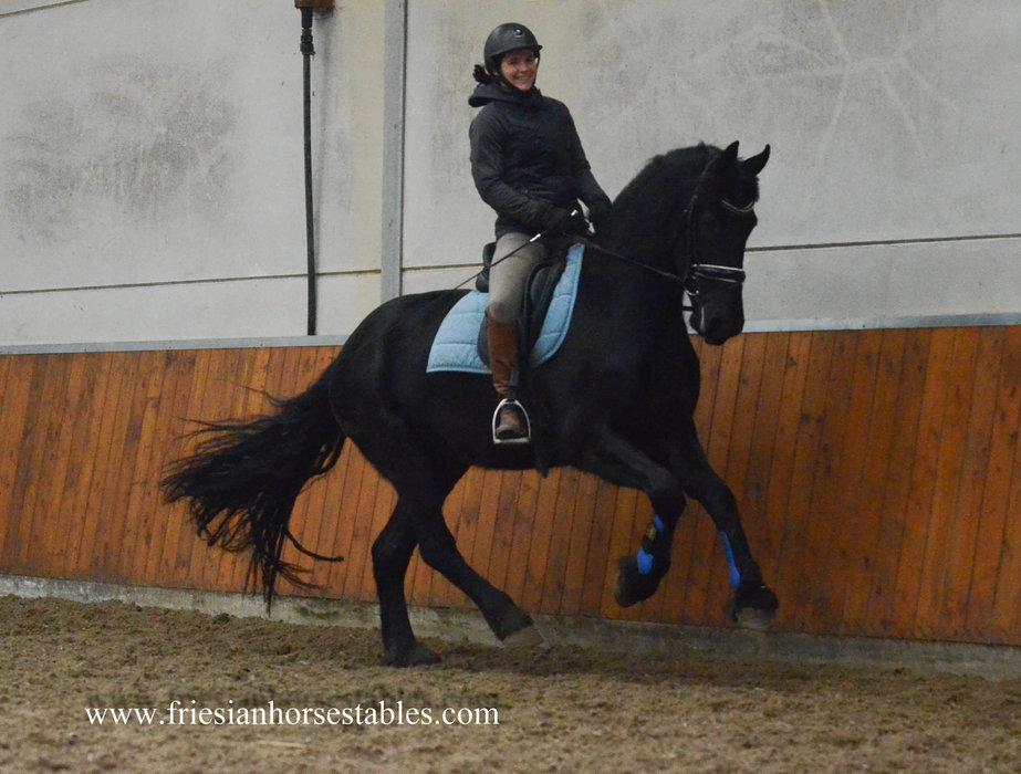 Zaya - Stendert 447 Sport x Heinse 354 Sport+Pref - Toekomstig familie paard!