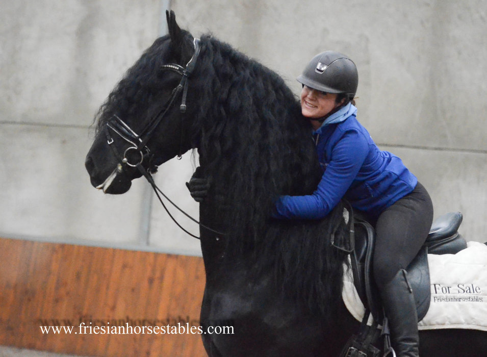 Wishful is sold to Michael in Austria - Congratulations with this handsome stallion!!