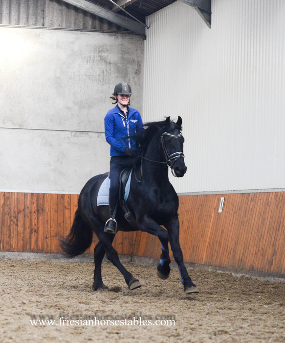 Arno - Beart 411 Sport+Pref x Erik 351 Sport - Out of a Sport+Pref mother - Impressive stallion, future sports horse!