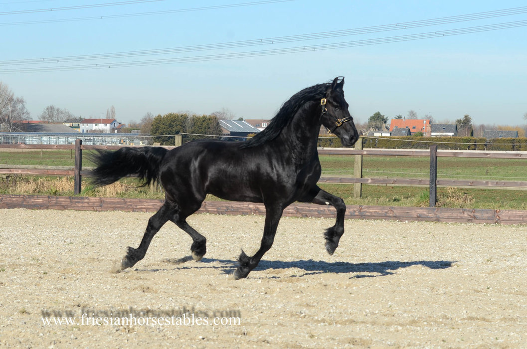 Appie is sold to David and Michelle in the UK - Congratulations with this amazing horse!