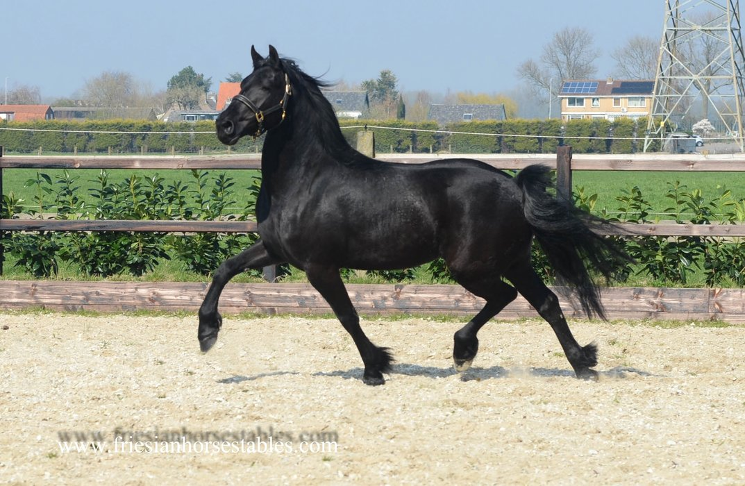Anne is sold to Ingrid in Holland - Congratulations with this lovely mare!!