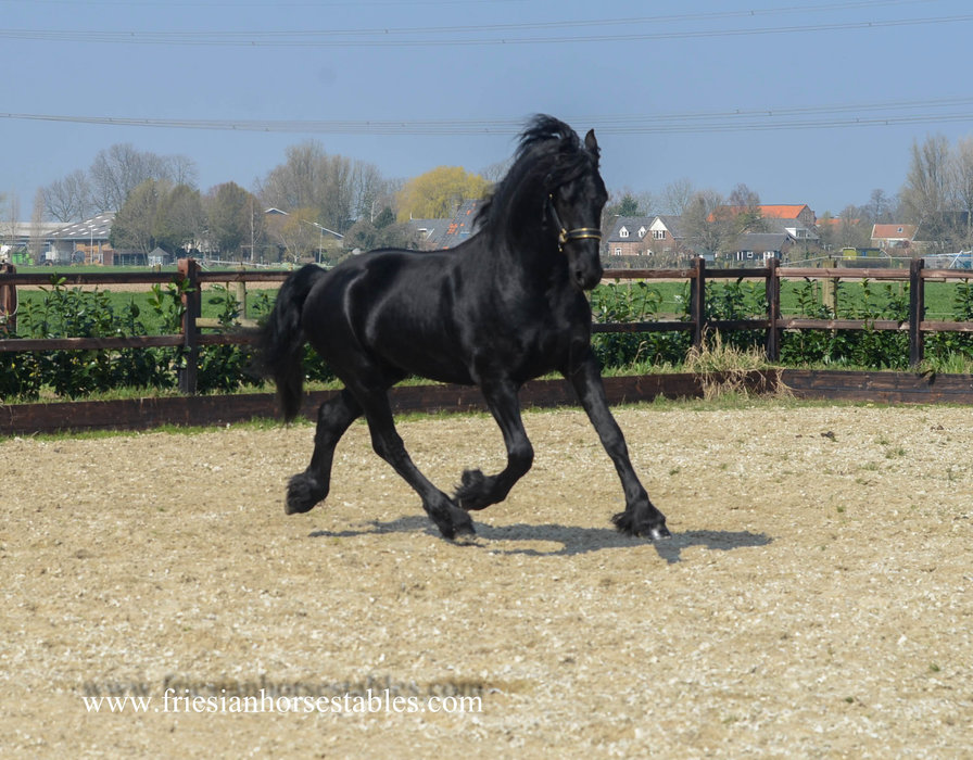 Baron is sold to Monique in Holland - Congratulations with this sweet handsome boy!!