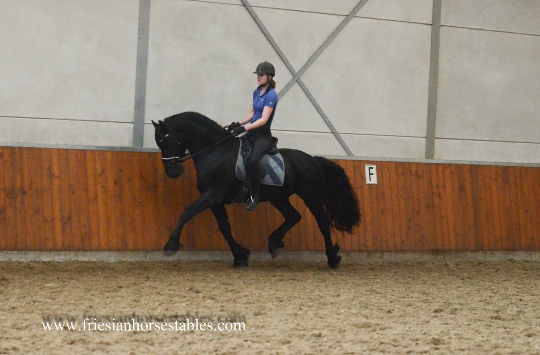 Bindert is sold to Esther in Holland - Congratulations with this fantastic black beauty!!
