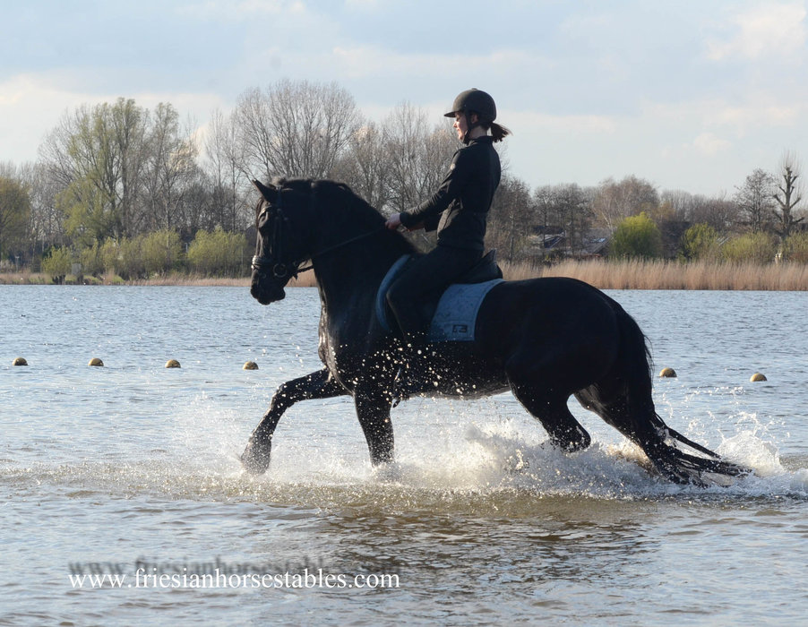 Jens is sold to Marjan in Holland - Congratulations with this lovely gelding!!