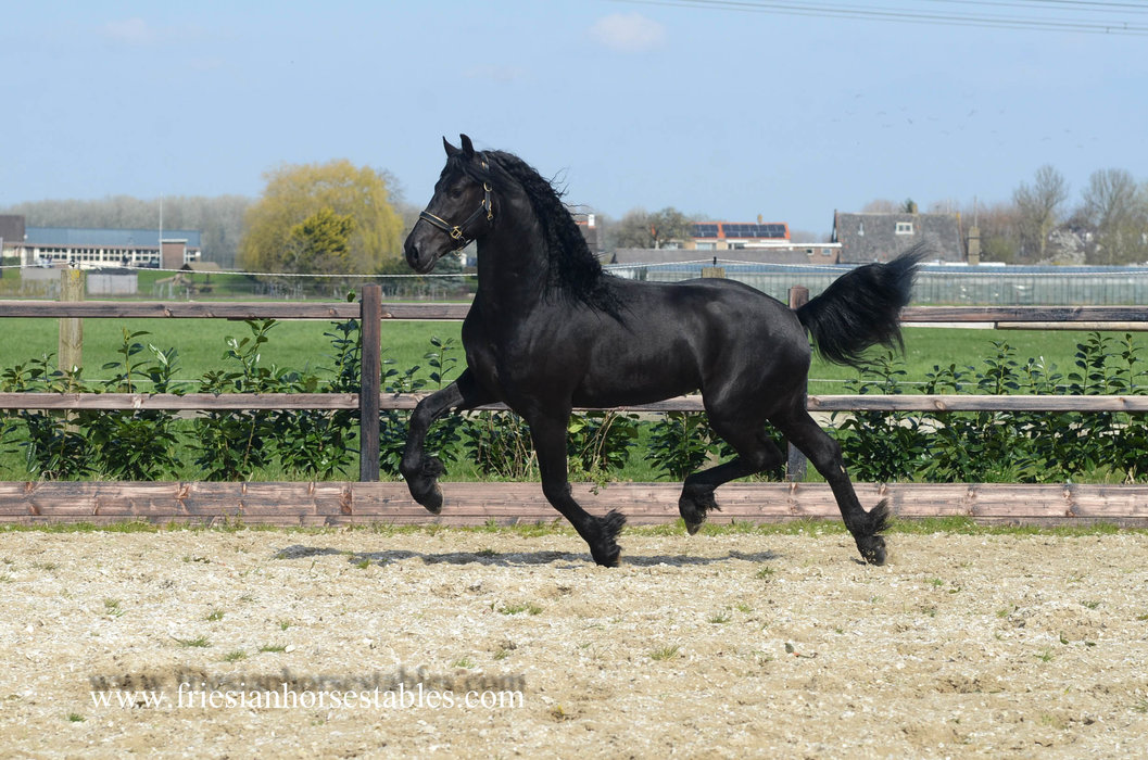 Bieuwe - Jouwe 485 Sport x Take 455 Sport - 3rd round Ster stallion - A picture says more than thousand words - Future TOP Sports stallion!!