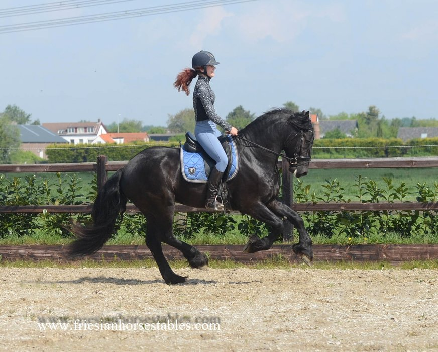 Anno is sold to Debbie in the UK - Congratulations with this amazing horse!!